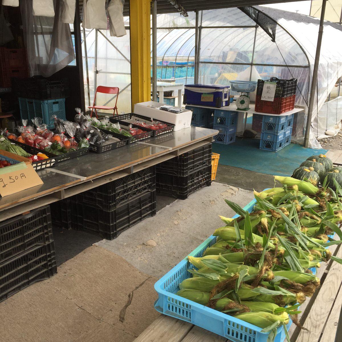 【札幌市東区の野菜直売所】 「河合農園」札幌近郊の ドライブで行ける新鮮野菜が買える場所。厚田で、じっくり育てた味の濃い野菜に大満足!